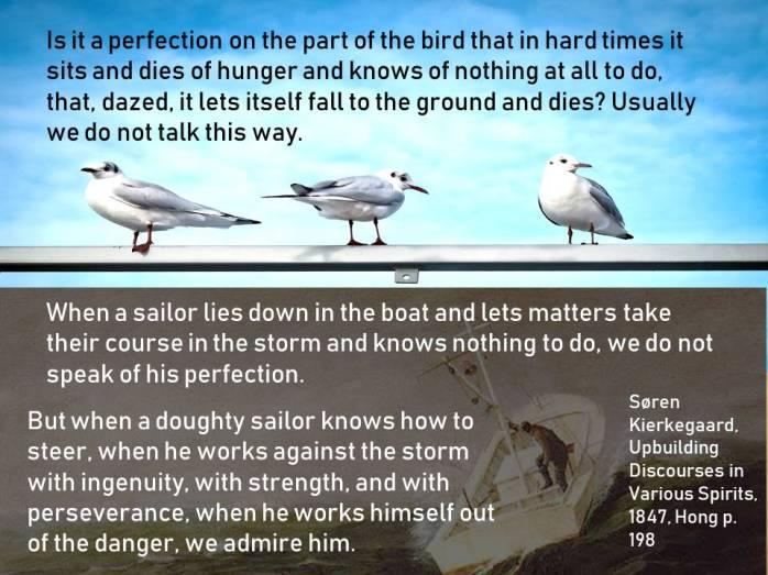 SK bird sailor